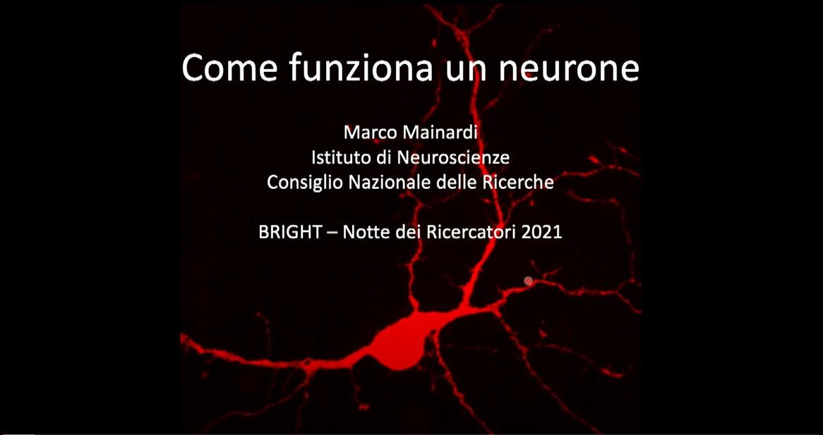 """Un problema """"spinoso"""": come i neuroni comunicano tra loro."""